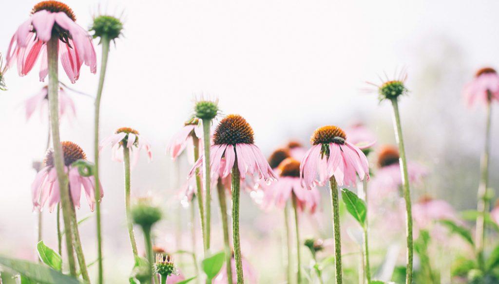 画像イメージ:花が咲いたハーブ